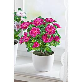 Azaleen-Bouquet lila