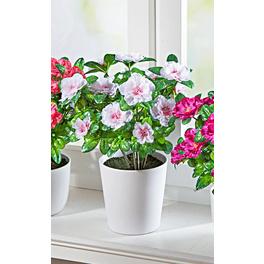 Azaleen-Bouquet weiß