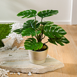 "Pflanze ""Monstera"""