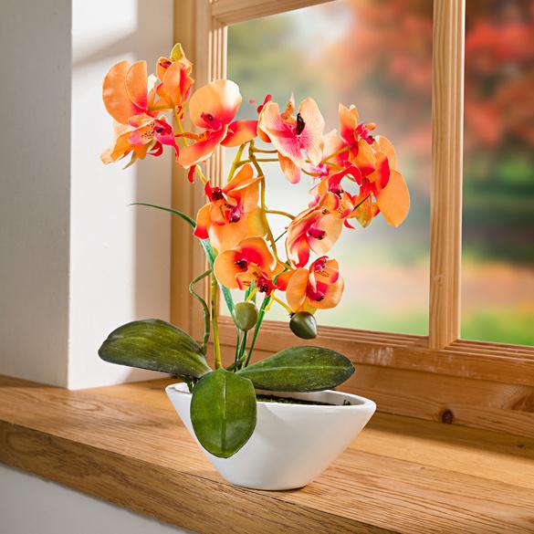 """Orchidee """"Phalaenopsis"""" orange"""