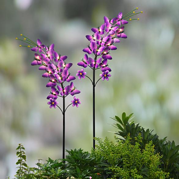 Solar-Schmetterlingsblume