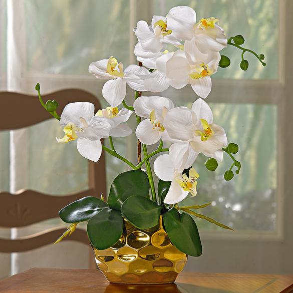 "Topfpflanze ""Orchidee"""