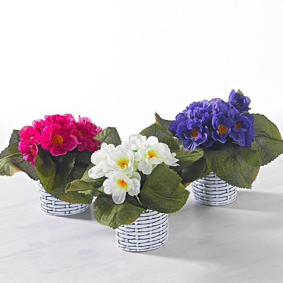 Usambara-Veilchen lila/weiß/pink, 3er-Set