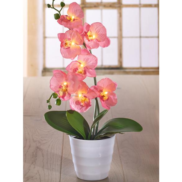 LED-Schmetterlingsorchidee