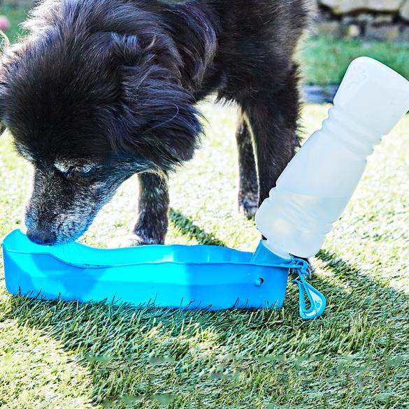 Hunde-Trinkflasche, 450 ml