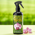 Orchideen-Spray