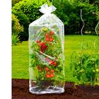Pflanzhauben für Tomaten, 2er-Set