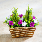 "Blumenkorb ""Petunien"""