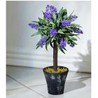 Lavendel-Baum