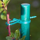 Pflanzenstamm-Fixierer, 50er-Set