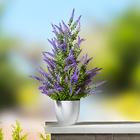 Lavendelbäumchen im Topf