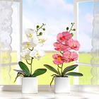 Orchideen im Topf pink