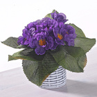 Usambara-Veilchen lila